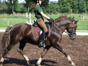 rider position